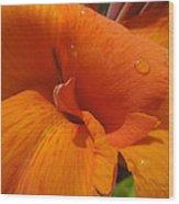 Orange Canna Wood Print by Peg Toliver
