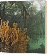 Orange Sponges Grow Wood Print by Tim Laman