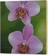 Orchid Delight Wood Print by Adele Moscaritolo