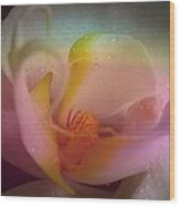 Orchid Splendor Wood Print by Shirley Sirois