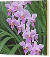 Orchids 15 Wood Print by Becky Lodes