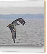 Osprey Grab Wood Print by Brian Wallace