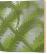 Ostrich Fern Frond Pattern Of Curves Wood Print by Kathleen Clemons