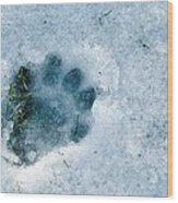 Otter Footprint In Snow Wood Print by Duncan Shaw