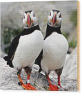 Pair Of Puffins Wood Print by Betty Wiley