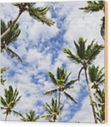 Palm Trees Wood Print by Elena Elisseeva