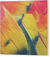 Parrot Feathers Wood Print by Flash Parker