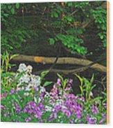 Phlox Along The Creek 7185 Wood Print by Michael Peychich