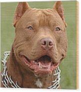Pitbull Red Nose Dog Portrait Wood Print by Waldek Dabrowski