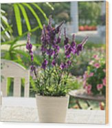 Plastic Lavender Flowers  Wood Print by Nawarat Namphon