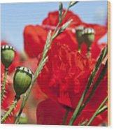 Poppy Pods Wood Print by Jane Rix