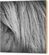 Portrait Of A Wild Horse Wood Print by Bob Decker