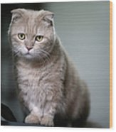 Portrait Of Cat Wood Print by LeoCH Studio