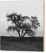 Prairie Dog Wood Print by Jerry Cordeiro