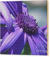 Pretty In Pericallis Wood Print by Rory Sagner