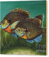Pretty Little Panfish Wood Print by Kathleen Kelly Thompson