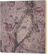 Processional Termites Wood Print by Bjorn Svensson