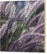 Purple Ornamental Fall Grass Wood Print by Marjorie Imbeau