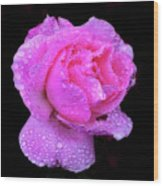 Queen Elizabeth Rose After Heavy Rainfall Wood Print by DSW Creative Photography