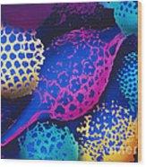 Radiolarians Wood Print by Omikron