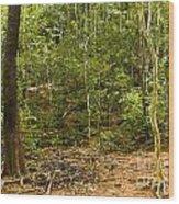 Rain Forest Wood Print by John Buxton