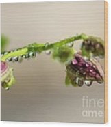 Raindrops On Orchid Buds Wood Print by Theresa Willingham