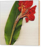 Red Canna Wood Print by JDon Cook