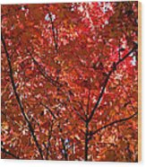 Red Leaves Black Branches Wood Print by Rich Franco