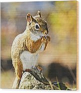 Red Squirrel Wood Print by Elena Elisseeva