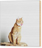 Red Tomcat Sitting On Wooden Table Wood Print by MarcelTB