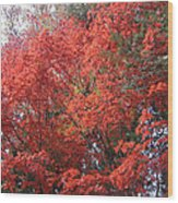 Red Tree Wood Print by Naxart Studio