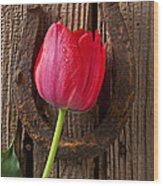 Red Tulip And Horseshoe  Wood Print by Garry Gay