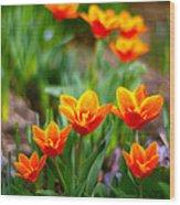 Red Tulips Wood Print by Paul Ge