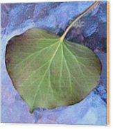 Reverse Ivy On Blue Wood Print by Beth Akerman