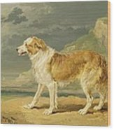 Rough-coated Collie Wood Print by James Ward