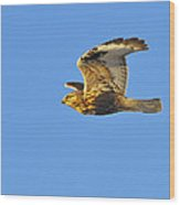 Rough-legged Hawk Wood Print by Tony Beck