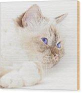 Sacred Cat Of Burma Wood Print by Melanie Viola