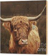 Scottish Moo Coo - Scottish Highland Cattle Wood Print by Christine Till