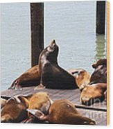 Sea Lions At Pier 39 San Francisco California . 7d14314 Wood Print by Wingsdomain Art and Photography