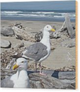 Seagull Bird Art Prints Coastal Beach Bandon Wood Print by Baslee Troutman