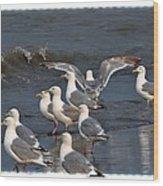 Seagulls Gathering Wood Print by Debra  Miller