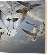 Seagulls In Flight Wood Print by Natural Selection Ralph Curtin