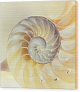 Seashell. Light Version Wood Print by Jenny Rainbow