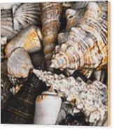 Seashells Wood Print by Hakon Soreide