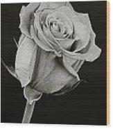 Sharp Rose Black And White Wood Print by M K  Miller