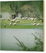 Sheep Grazing Amidst Flood Wood Print by Cindy Wright