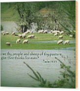 Sheep Grazing Scripture Wood Print by Cindy Wright