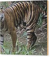 Snarling Tiger Wood Print by Brendan Reals