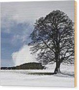 Snowy Field And Tree Wood Print by John Short