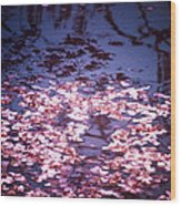 Spring's Embers - Cherry Blossom Petals On The Surface Of A Pond Wood Print by Vivienne Gucwa